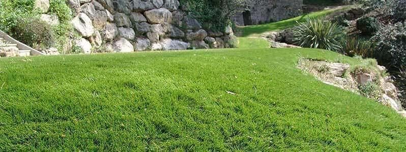 Grass carpet melbourne
